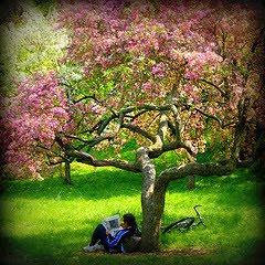 Un libro y un árbol: la juventud