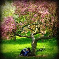 leer bajo un arbol