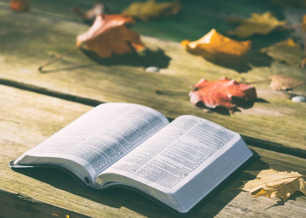 Metaliteratura: Libros que hablan de libros